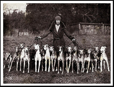 Greyhound Lady And Her Sixteen Dogs Great Period Image On Dog Print Poster