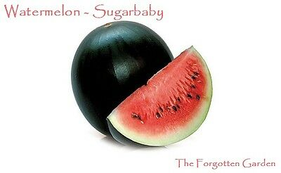 Watermelon Sugarbaby Seed 20 Seeds Heirloom Sweet Fruit Garden Sugar Baby