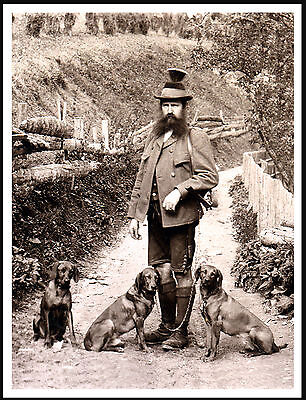 Hungarian Vizsla Gentleman And Dogs Lovely Vintage Image On Dog Print Poster