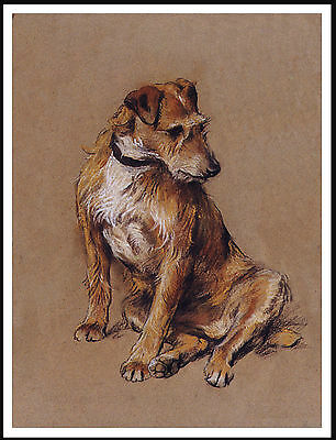 Irish Terrier Seated Dog Lovely Dog Print Poster