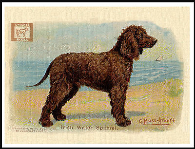 Irish Water Spaniel Dog On Lovely Vintage Style Advert Print Poster