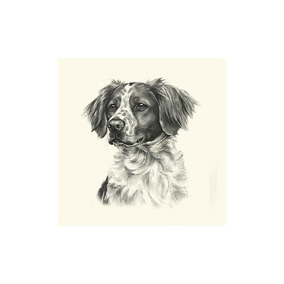 Dog Show Ring Number Clip Pin Breed - Brittany Spaniel