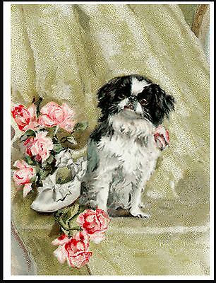 Japanese Chin Little Dog With Roses Lovely Dog Print Poster