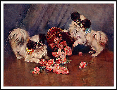 Japanese Chin Two Little Dogs And Flowers Lovely Dog Print Poster