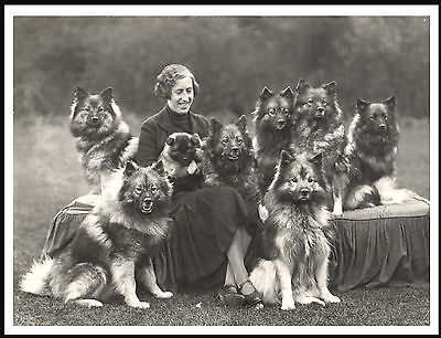 Keeshond Lady And Her Dogs Lovely Dog Print Poster
