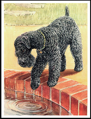 Kerry Blue Terrier  Looking Into Pond Lovely Vintage Style Dog Print Poster
