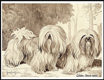 Lhasa Apso Lovely Image Two Dogs On Dog Print Poster