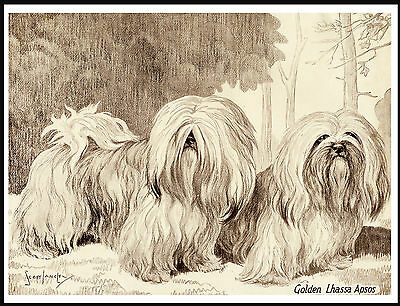 Lhasa Apso Two Dogs Lovely Vintage Style Image On Dog Art Print Poster