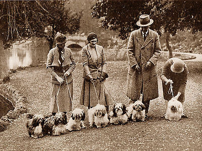 Lhasa Apso Owners And Dogs At Show Lovely Vintage Style Image Dog Print Poster