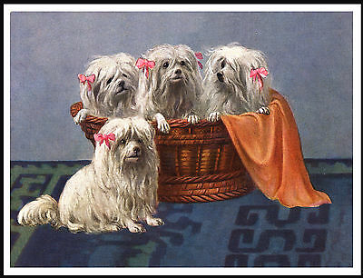 Maltese Four Little Dogs In A Basket Lovely Dog Print Poster
