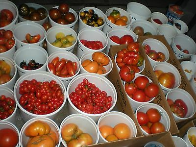 MIX from 165 DIFFERENT KINDS of TOMATOES! 200 Seeds! SEE LIST OF ALL VARIETY'S!