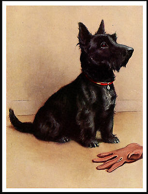 SCOTTISH TERRIER GUARDS OWNERS GLOVE LOVELY DOG PRINT POSTER