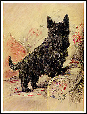 SCOTTISH TERRIER STANDING IN ARM CHAIR LOVELY DOG PRINT POSTER