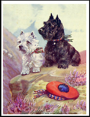 SCOTTISH WESTIE TERRIER DOGS WITH TAM O' SHANTER SAT ON ROCK DOG PRINT POSTER