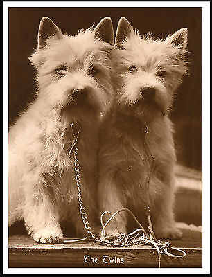 Westie West Highland White Terrier The Twins Lovely Image Dog Print Poster