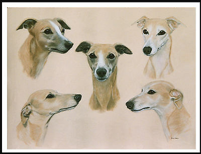 Whippet Group Head Study Lovely Dog Print Poster