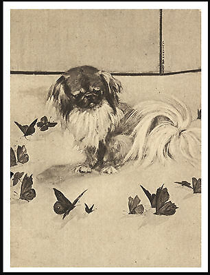 Pekingese And Butterflies Lovely Vintage Style Dog Art Print Poster