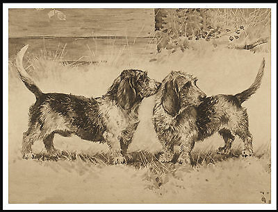 Petit Basset Griffon Vendeen two dogs LOVELY SEPIA IMAGE DOG PRINT POSTER