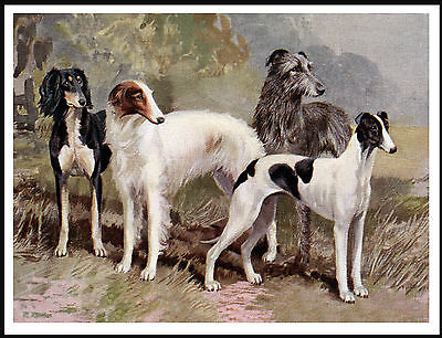 Saluki Borzoi Irish Wolfhound Greyhound Sight Hound Group Great Dog Print Poster