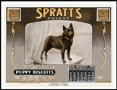 Schipperke On Lovely Vintage Style Dog Food Calendar Advert Art Print Poster