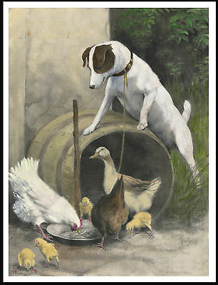 Jack Russell Fox Terrier With Hen And Chicks Lovely Old Style Dog Print Poster