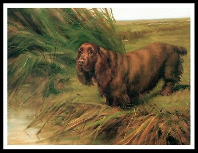 Sussex Spaniel By Stream Lovely Vintage Style Dog Print Poster