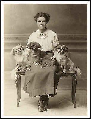 Tibetan Spaniel Lady And Her Dogs Lovely Period Image On Dog Print Poster