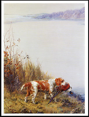 Welsh Springer Spaniel Carrying Bird Great Image On Dog Print Poster