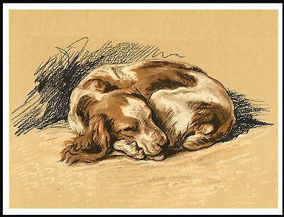 Welsh Springer Spaniel Curled Up Asleep Charming Image Dog Print Poster