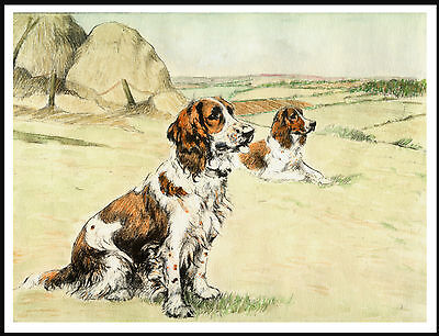 Welsh Springer Spaniel Two Dogs Waiting To Work Great Image On Dog Print Poster