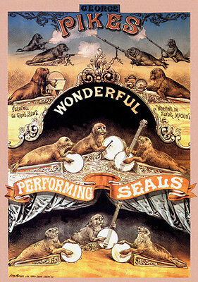 Victorian Music Hall Circus Act Wonderful Performing Seals A3 Poster Reprint