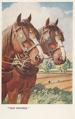 VINTAGE A/S WHYDALE ARTIST HORSE POSTCARD - HANDSOME PAIR OF DRAFT HORSES