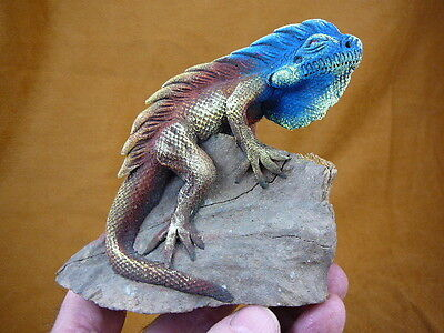 (TL-249) Blue Iguana LIZARD reptile TEAK WOOD carving FIGURINE I love lizards