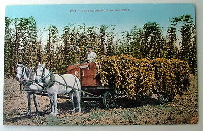 Postcard Harvesting Hops In The West Wagon Loaded With Hops Horse Man