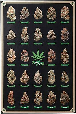 BEST BUDS - WEED POSTER - 24x36 MARIJUANA SMOKING POT 10270
