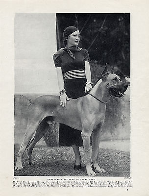 Great Dane Usa Champion And Young Lady Old Original 1934 Dog Print