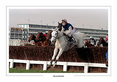 Desert Orchid  Horse Racing  A4 Print Photo Simon Sherwood