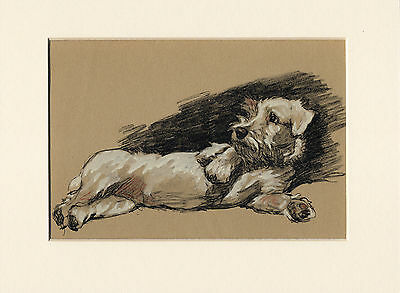 Sealyham Terrier Lovely Image Old 1930's Cecil Aldin Dog Art Print Ready Mounted