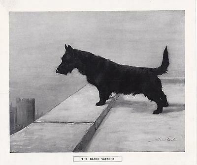Maud Earl Scottish Terrier Print The Black Watch The Graphic Illustrated 1915