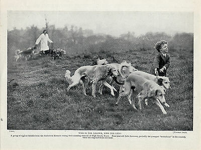Saluki Dogs And Small Boy Charming Old Original Dog Print From 1935