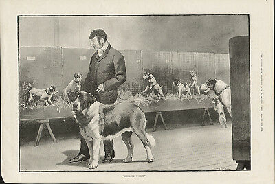 Saint Bernard And Fox Terriers At A Dog Show Antique 1891 Print By Cecil Aldin