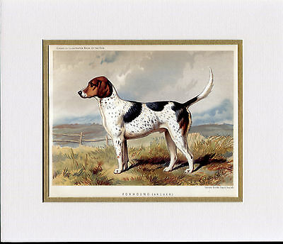 Foxhound Named Dog Antique Litho Print From 1881 Mounted Ready To Frame