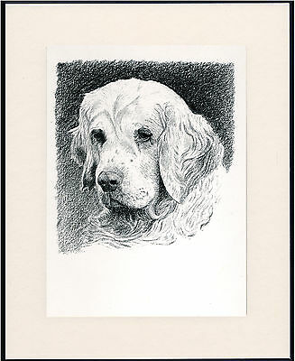 Clumber Spaniel Old Dog Head Study Print From 1935 Mounted Ready To Frame