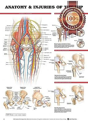New Anatomy Of The Hips Orthopaedic Diagram Chart Guide Print - Premium Poster