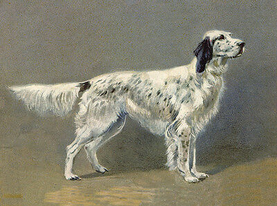 English Setter Charming Dog Greetings Note Card Beautiful Standing Dog