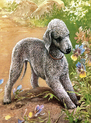 Bedlington Terrier Charming Dog Greetings Note Card Dog Digs Hole In Garden