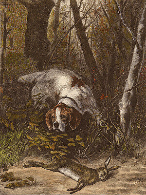 Irish Red And White Setter Dog Greetings Note Card Dog In The Woods