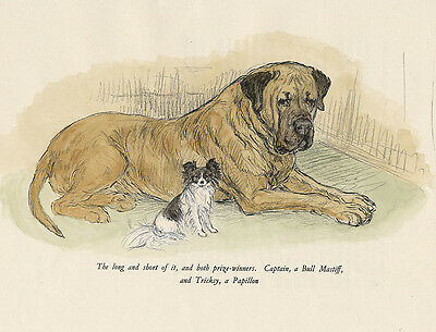 Papillon & Bullmastiff Charming Dog Greetings Note Card Two Beautiful Dogs