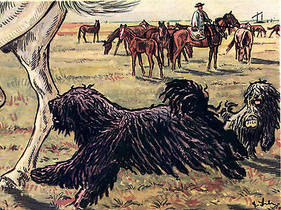Hungarian Puli Dogs At Work Dog Art Greetings Note Card