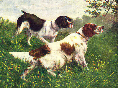 Irish Red And White Setter And Pointer Dog Greetings Note Card Two Dogs